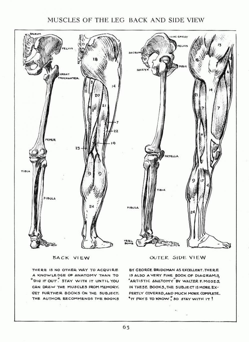 051 | Anatomy References for Artists
