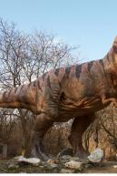 Image from Tyrannosaurus Rex Modeling Photo References - 250829thyranosaurus_0111.jpg