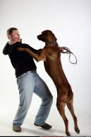 Image from Dog playing and attacking - 70272009_07_dog_rr_action_07.jpg
