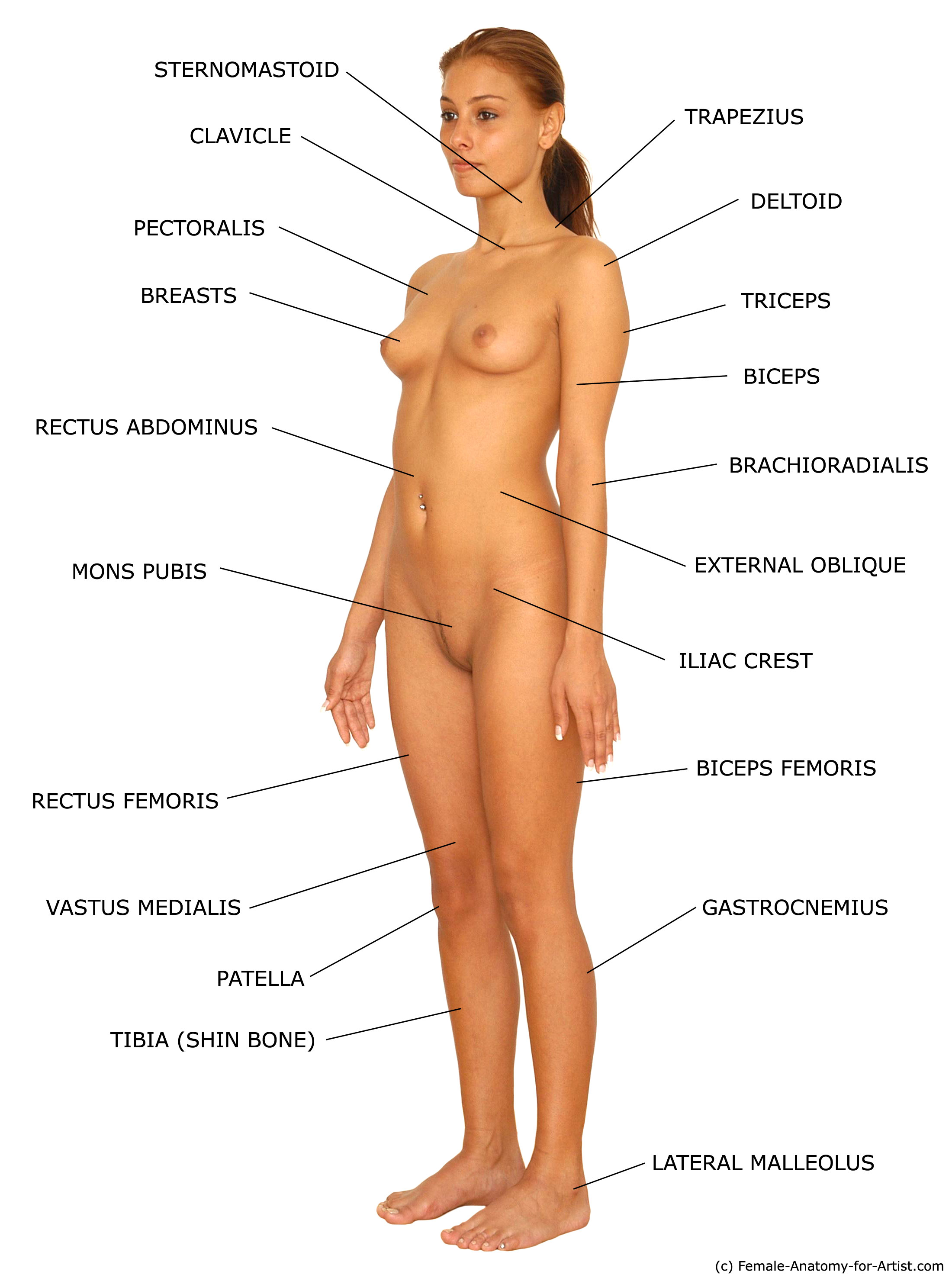 naked human pictures jpg 853x1280