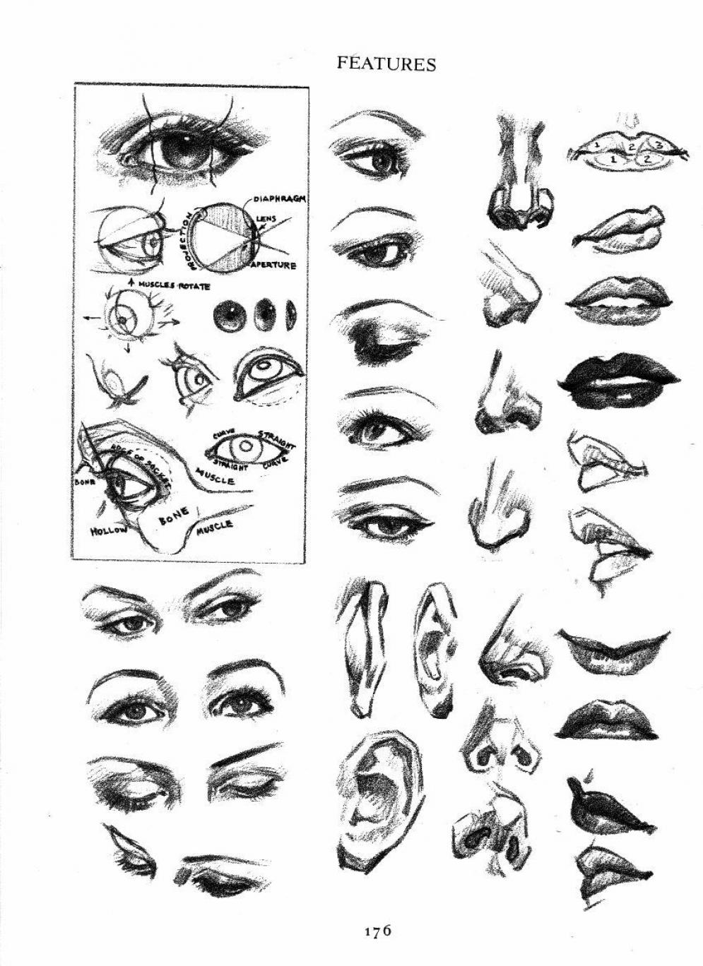 162 | Anatomy References for Artists